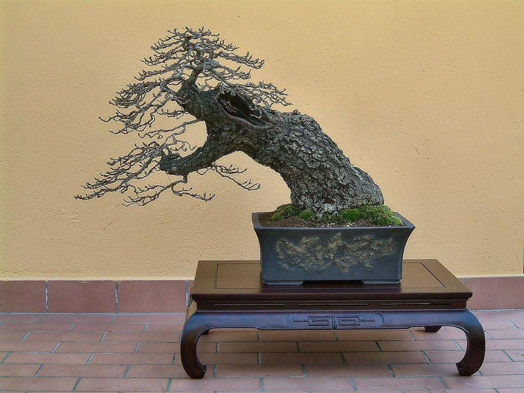 Bonsai Suiseki Magazine