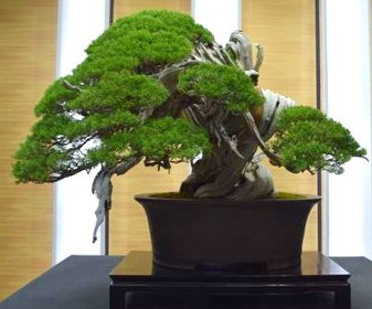 The 8th World Bonsai Convention a Saitama